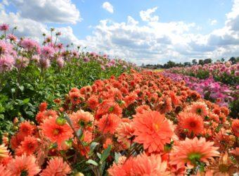 Terra Botanica : Plus de 275 000 plantes et 5 000 espèces