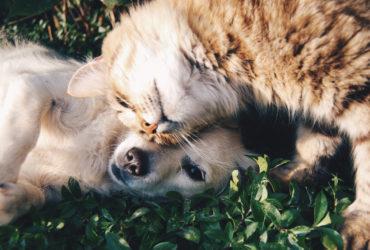 Chiens et chats comment les faire vivre ensemble ?