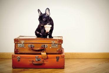 Pourquoi votre chien n'aurait-il pas le droit à des vacances à l'étranger ?
