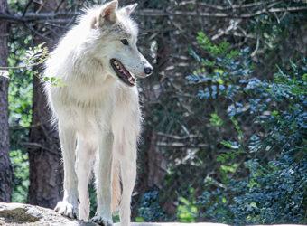 Legendia Parc : Parcours animaliers & Spectacles légendaires